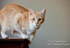 OC (Orange Cat) 0130