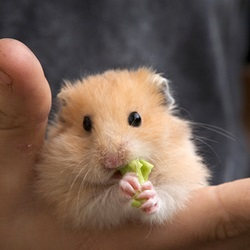 6 Ways to Find a Lost Hamster