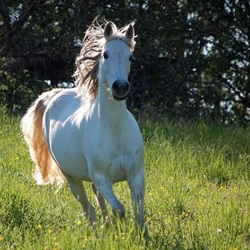 15 Gorgeous Arabian Horses