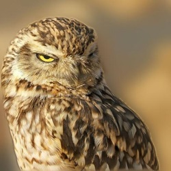 15 High Quality Owl Photos