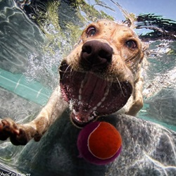10 Underwater Dog Photos by Seth Casteel