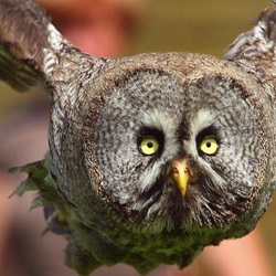 15 Striking Owls in Flight