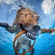 Never-Before-Seen Photos from Underwater Dogs by Seth Casteel