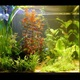 The Advantages of Live Aquarium Plants