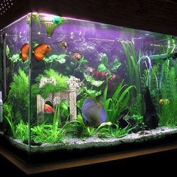 The Advantages of Artificial Aquarium Plants