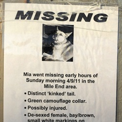 How to Find a Lost Cat or Dog?