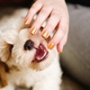 How To Stop Puppy Biting?