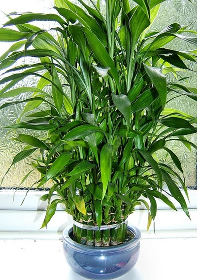 Poisonous Indoor Plants For Cats