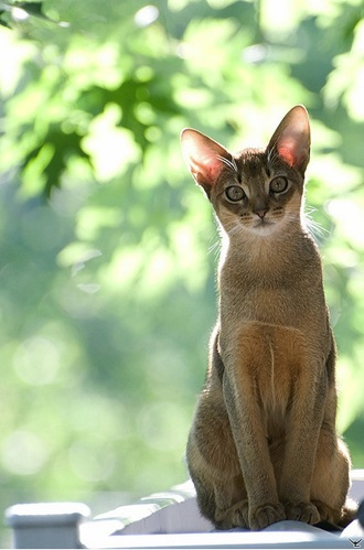is aloe vera poisonous to cats
